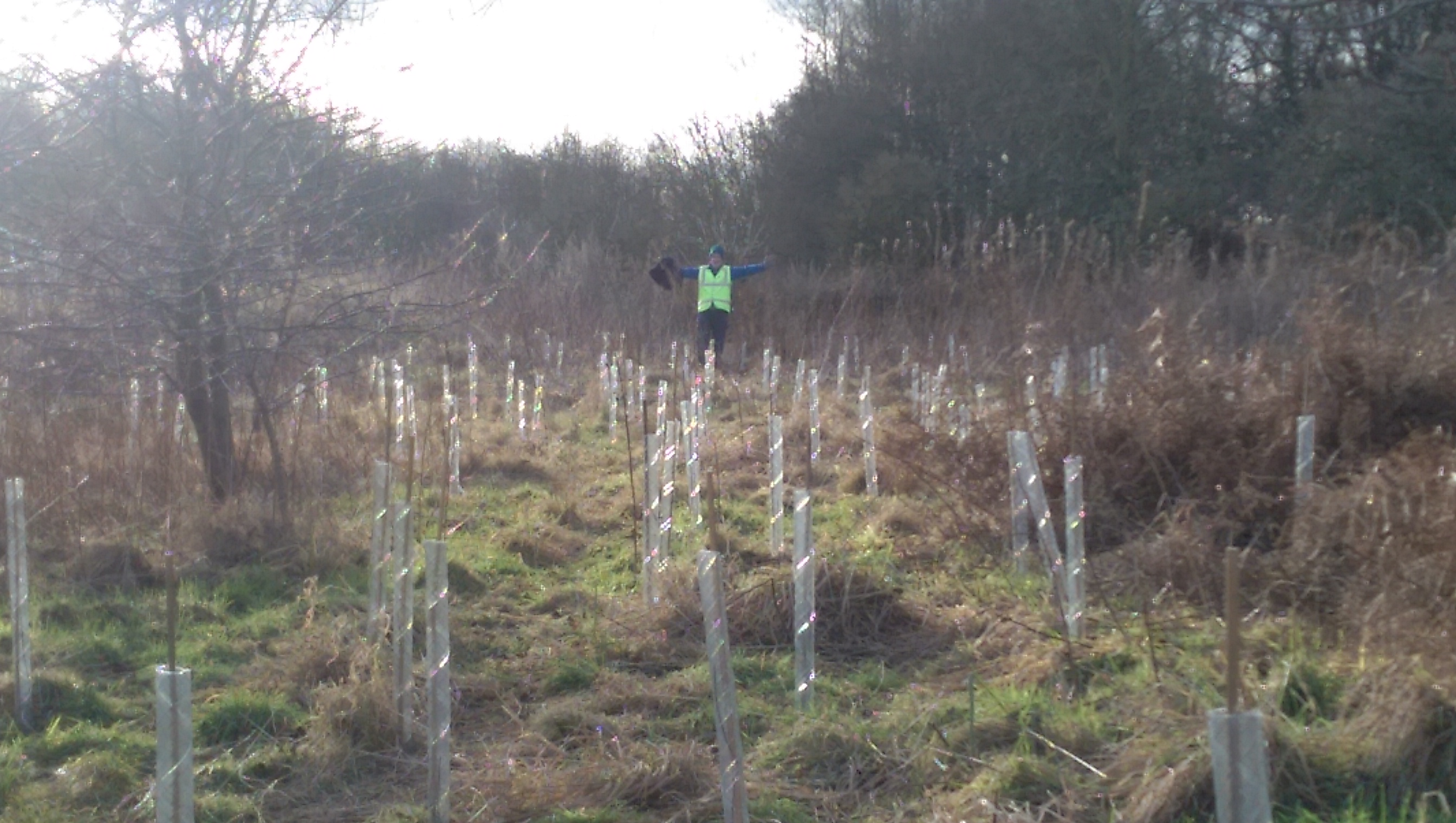 We planted 420 trees in Pontefract Park