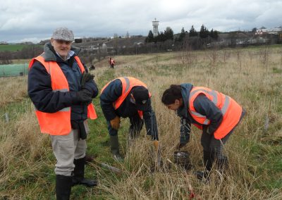 Tree planting and skylarks
