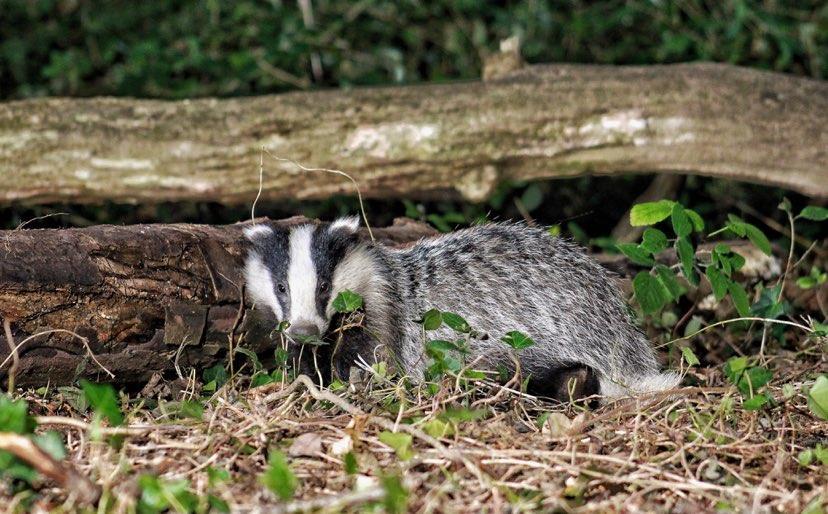 Wonderful Wildlife Webcams